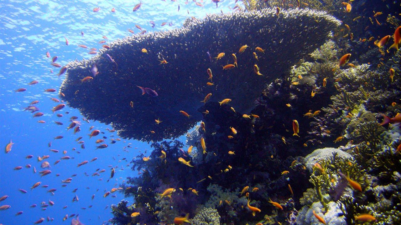 Thomas Reef Egypt Dive Site Review - www.simplyscuba.com - YouTube