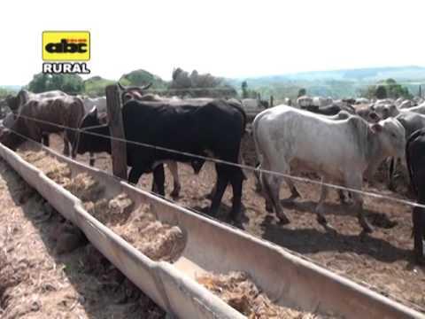 Confinamiento en la cría de ganado