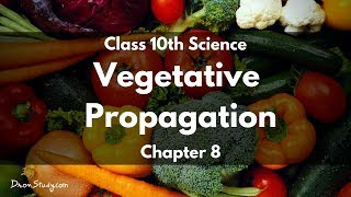 Class 10 Science How do Organisms Reproduce - Vegetative Progagation