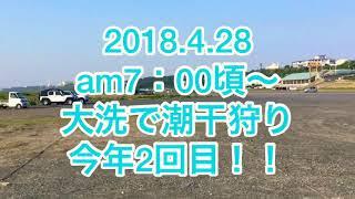 2018.4.28 中潮 大洗に潮干狩りに行ってきた動画 採りに来てる人多いで...