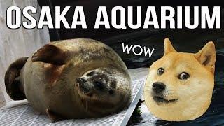 Osaka Aquarium Kaiyukan - GLOCO Japan VLOG