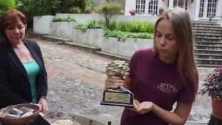 Planeta Organica: почему в Гватемале лучшее масло зеленого кофе