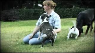 Miniatur Bullterrier Vom Emkental // Diana Lukas Mit Ihren Mini Bullterrier Welpen