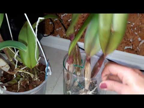 Орхидеи,Виды орхидей,фото и видео орхидеи, уход за