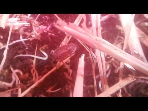 AMVgrow Living Organic Soil