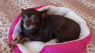 видео Домики-кровати для кошек и собак на Алиэкспресс