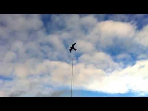 eagle kite assembly instructions