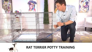 Rat Terrier Potty Training from WorldFamous Dog Trainer Zak George  Potty Train Rat Terrier Puppy