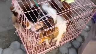 Опыт эвтаназии домашних и безнадзорных животных в ряде зарубежных стран