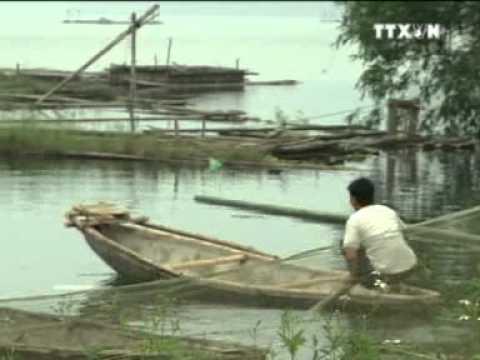 Dân Tộc Mường - Việt Nam: Cộng Đồng Các Dân Tộc Việt Nam