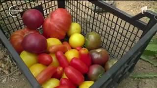 Românii au prins gustul preparatelor bio, iar restaurantele s-au adaptat şi ele
