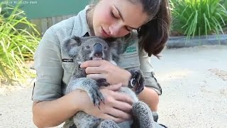 Repeat youtube video Koala Loves Cuddling and Hugging | Koala Funny and Cute Compilation