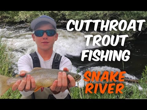 Cutthroat Trout Fishing ~ Snake River, WY