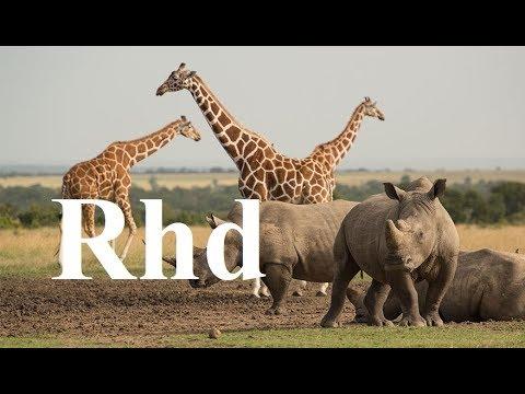 Zebra, Rhino, Giraffe,