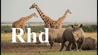 Zebra, Rhino, Giraffe, Crocs,  Waterberg, (part 2) Nature 2018 HD Documentary.