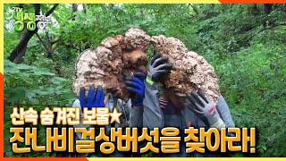 [2TV 생생정보] 산속 숨겨진 보물☆ 잔나비걸상버섯을 찾아라! | KBS 210721 방송