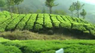 India 13. Ooty to Munnar