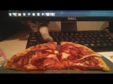 Compilation of Cats Stealing Food