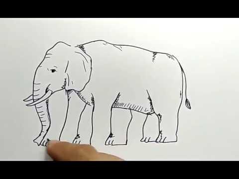 cara menggambar gajah dengan ilusi jumlah kaki / how to ...
