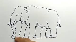 cara menggambar gajah dengan ilusi jumlah kaki / how to draw ilusion elephan foot
