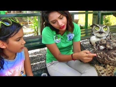 Ayudando Animalitos en Peligro! Visitando el Acuario P3