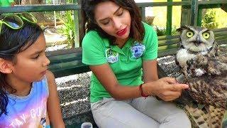 Ayudando Animalitos en Peligro! Visitando el Acuario P3 thumbnail
