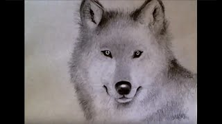 ♡ How to Draw Realistic Wolf (for beginners!)
