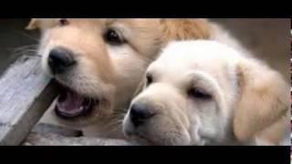 Fantasy Dog Village - отель класса ЛЮКС для собак в Екатеринбурге