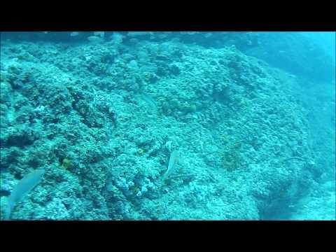 Mola Mola, Pez Luna, Inmersión, Buceo, Almuñecar