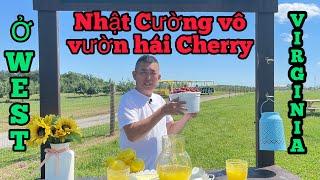 Nhật Cường vô vườn hái Chery ở West Virginia