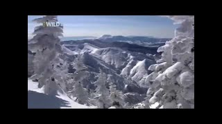 National Geographic Japan wildlife Nature Animals Documentary Films HD ◄► 1080i