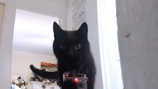Go Pro Cat Collar Cam - What the cats really get up to when no one is home.(We strapped a GoPro to each of our cats and left them to it for an hour, We thought they slept all day when we leave.... We found out the do the the very opposite ..., 2014-05-31T08:56:09.000Z)
