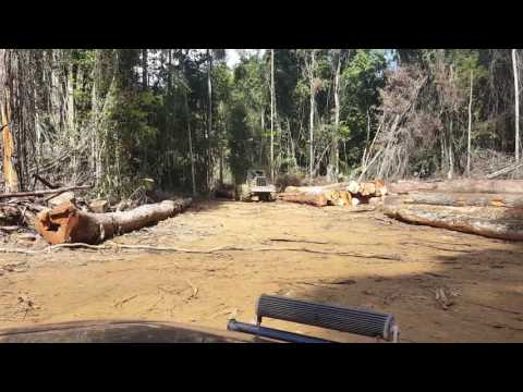 Suriname logging  ( Paul Lim)