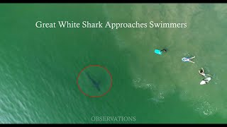 My Drone Warns Swimmers of a Shark & I Find Another One Injured-Close Up Footage.