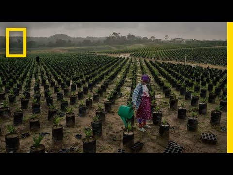 Africa's Complicated Food Puzzle | Future of Food