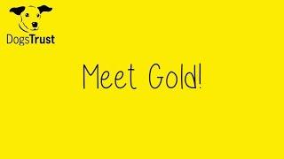Dogstrust Glasgow - Gold