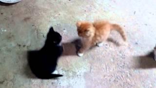 Мама кошка и котята