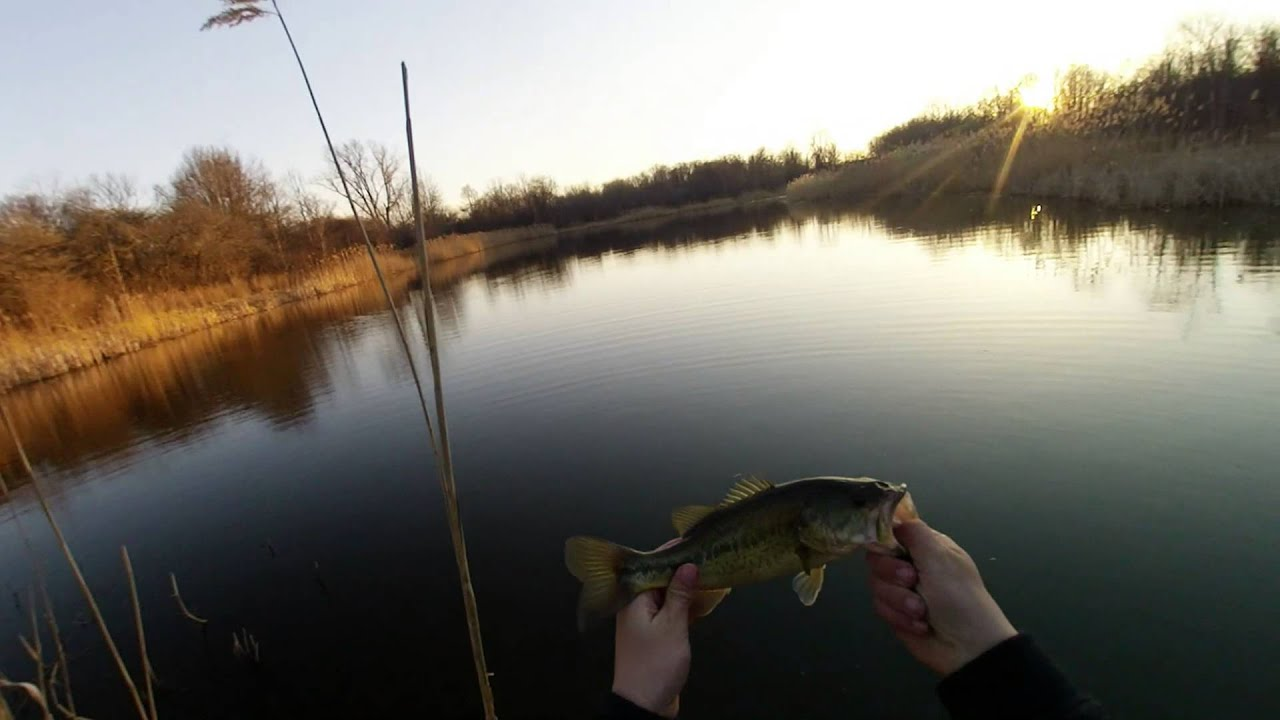 Early spring pond bass fishing youtube for Buy bass fish for pond