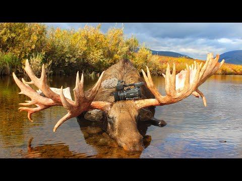 Moose hunt in Russia   Chukotka