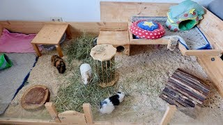 Guinea Pig Cage Cleaning Vlog