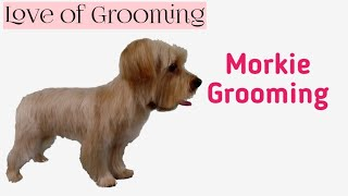 Grooming a Morkie | Yorkie Maltese Mix