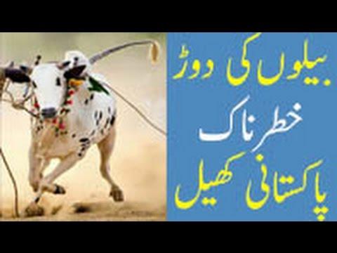 Bull Race - Traditional Sport of Punjab
