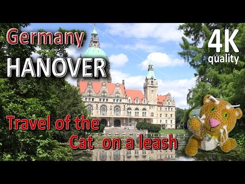 Hanover. Germany. Lower Saxony. Travel of the Cat on a leash