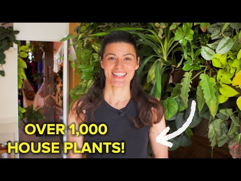 Finding The Perfect Plant Home For The Ultimate Plant Mom