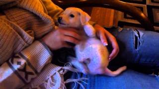 131116 Brady - Puppy Found On Street - Put On Craig's List for $15!  Ugh!