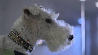 我が家のワイヤーフォックステリアと行った伊豆高原での映像です。イヌ...