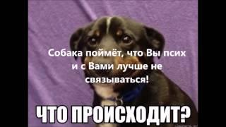 Как себя вести, если напали собаки