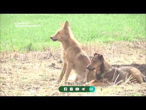 Телеканал UA: Рівне: Масова загибель тварин у будинку: поліція відкрила провадження