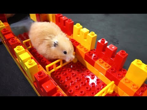 Hamster Lego Race Obstacle Course