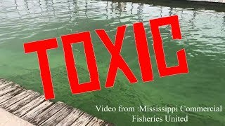 Toxic algae closes water at 9 Mississippi beaches
